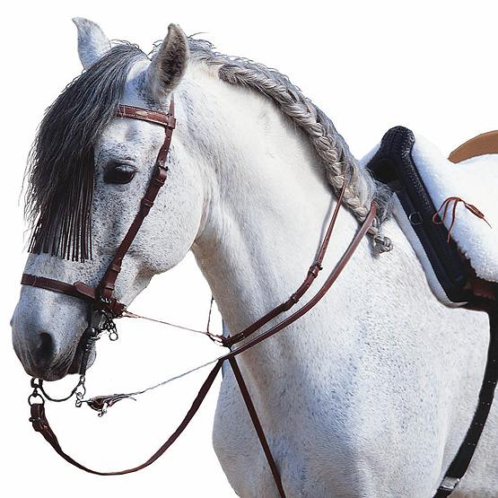 Equipación para el caballo