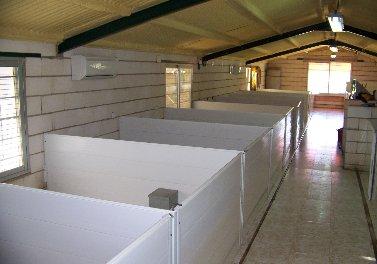Separadores PVC para perreras
