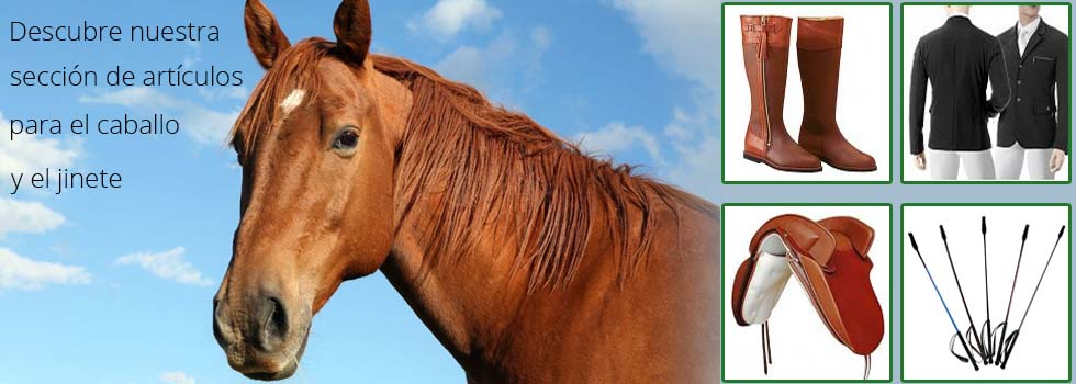 Seccion caballos